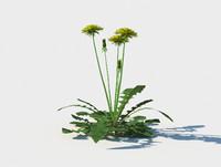 3D dandelion taraxacum officinale