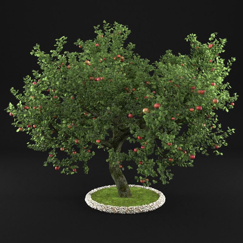 apple tree 3D model