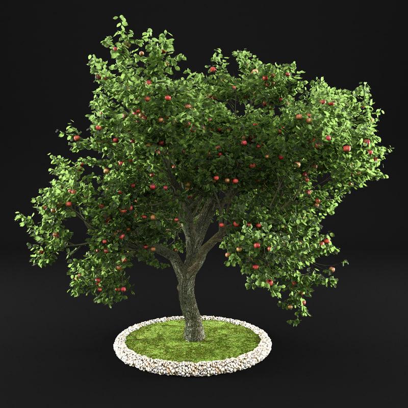 apple tree model