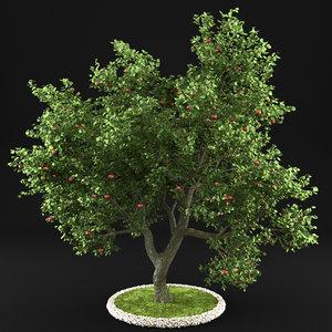 Apple Tree 7