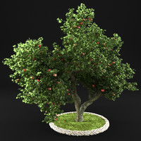 Apple Tree 8
