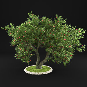 3D apple tree