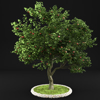 3D apple tree