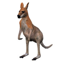 kangaroo low poly