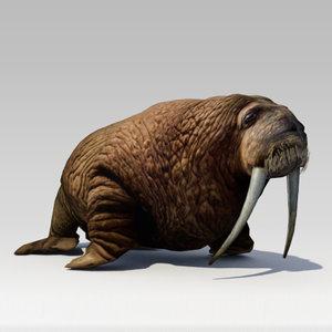 walrus animations 3D model