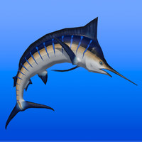 3D model blue marlin