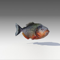 piranha animations 3D