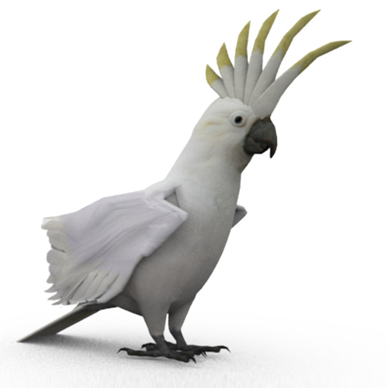 3D cockatoo animations model