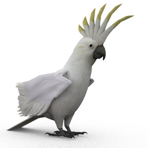 3D cockatoo animations model