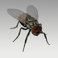 fly animations 3D model