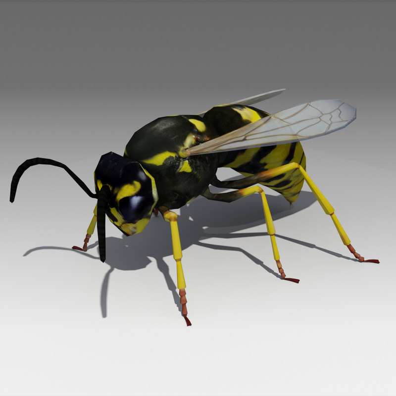 3D model wasp fly