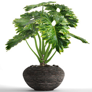 philodendron 3D