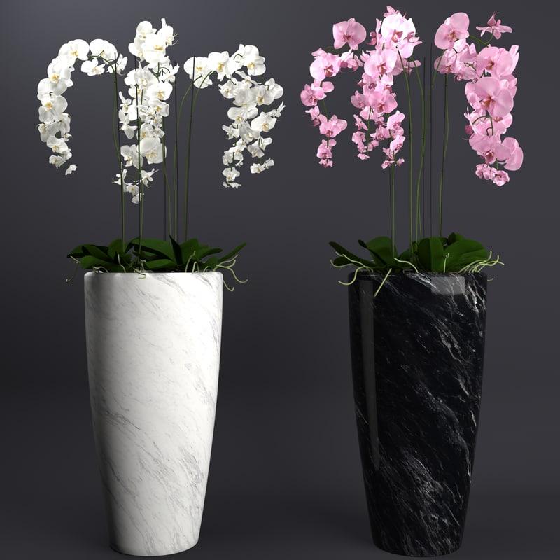 3D orchid plant model
