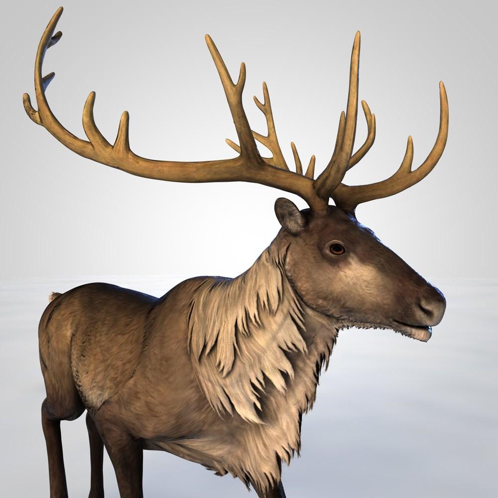3D reindeer rigged animation model