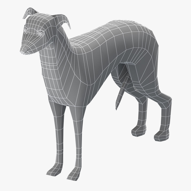 base mesh greyhound dog model