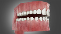 3D realistic mouth teeth tongue model