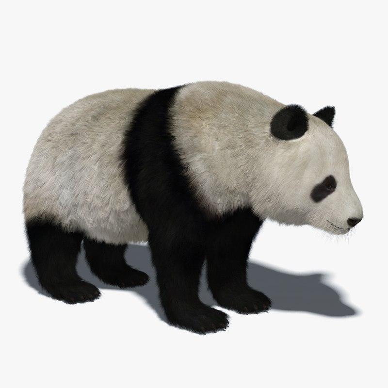 giant panda fur 3D model