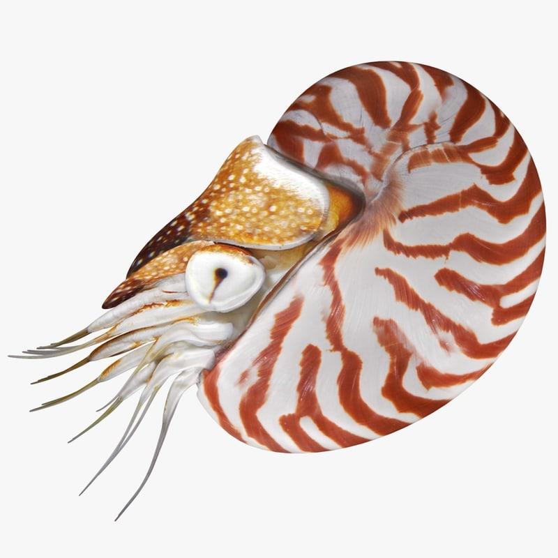 nautilus scanline model