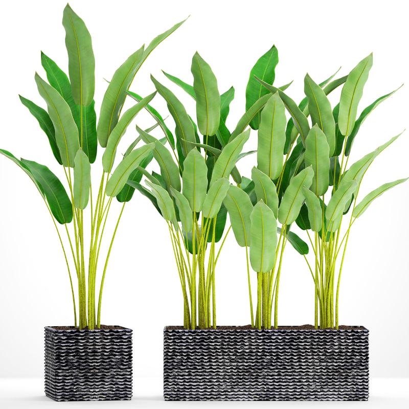 3D model banana plants