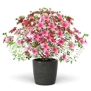 3D plant azalea