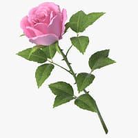 3D rose v7 model