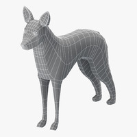 3D model base mesh koolie dog