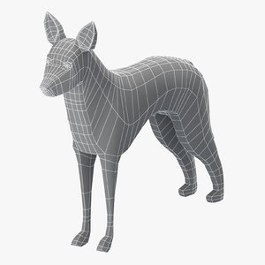 3D model base mesh koolie dog