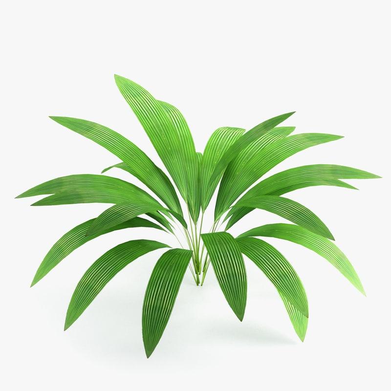 3D palm grass