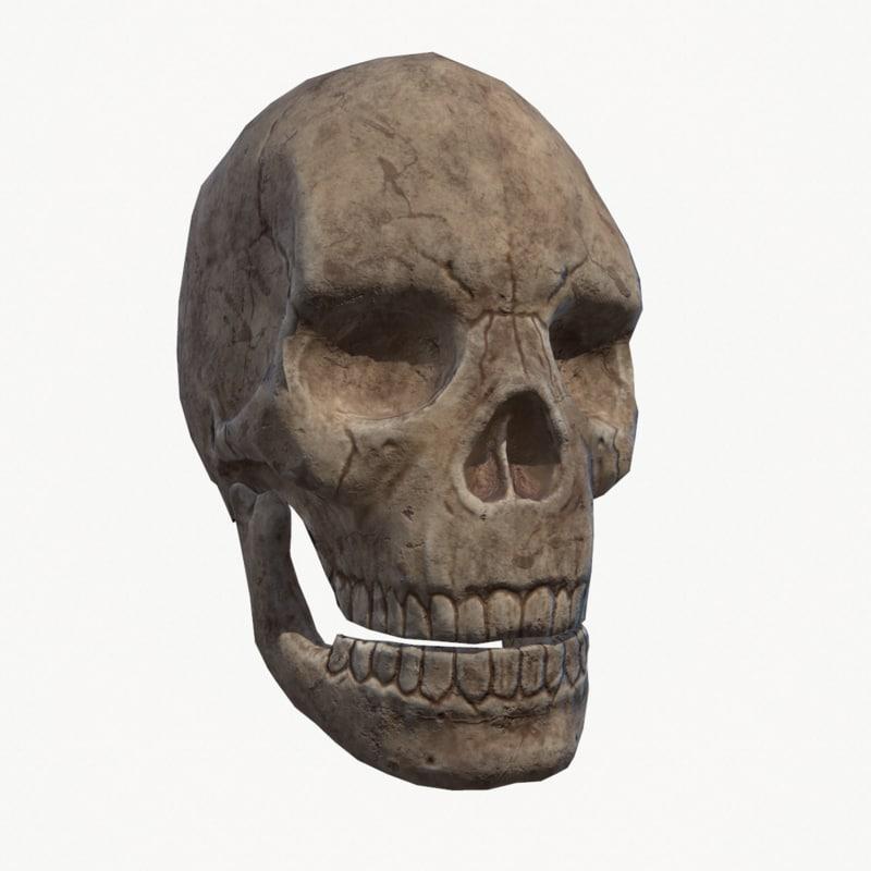 3D human skull -