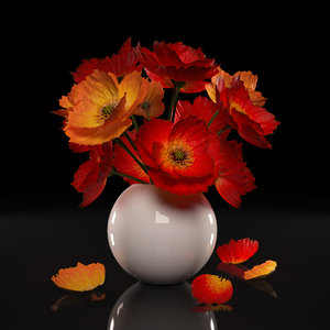 red poppies flowers model