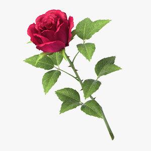 3D rose v7