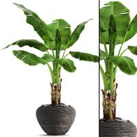 3D banana tree model