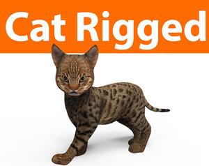 3D cute cat rigged