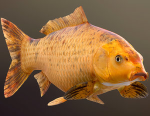 3D golden carp koi fish model