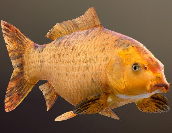 3D golden carp koi fish model