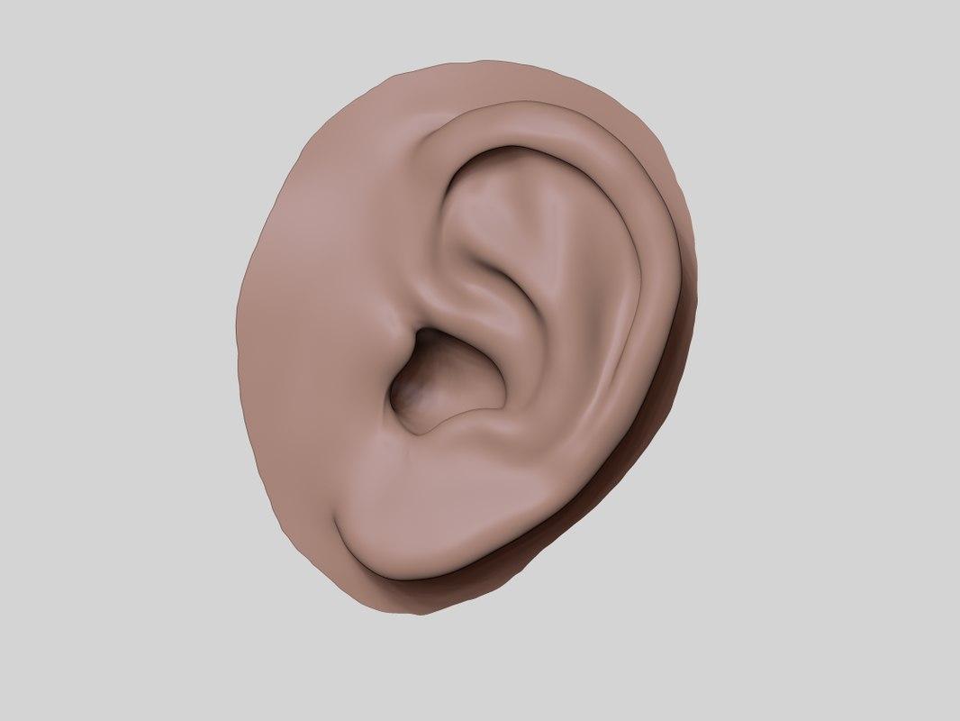 ear zbrush 3D model