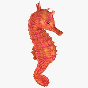 3D model realistic seahorse