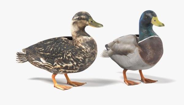 wild ducks 3D model