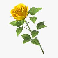 rose v7 3D model
