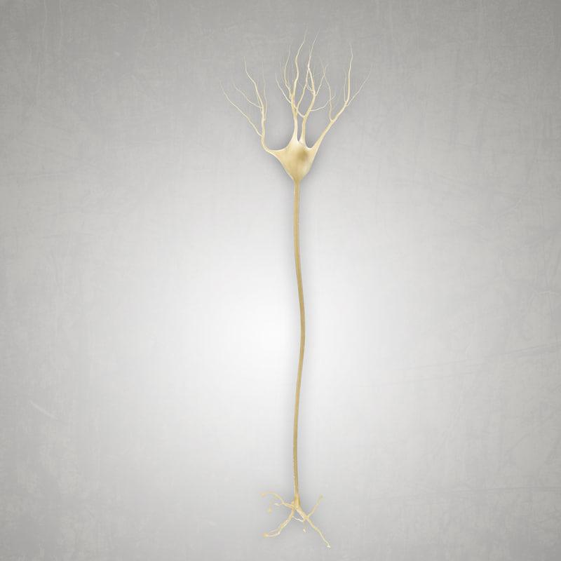 3D multipolar interneuron model