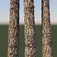 pine bark 8k 3D model