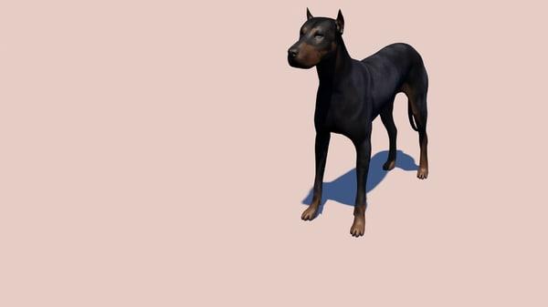 3D doberman dog