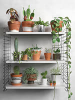 shelves plants 3D model