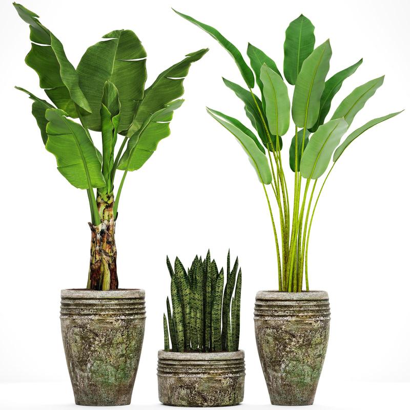 plants banana tree 3D model