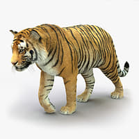 3D tiger rigged fur