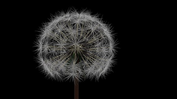 tree flower 3D model