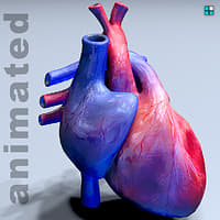 realistic heart animation 3D