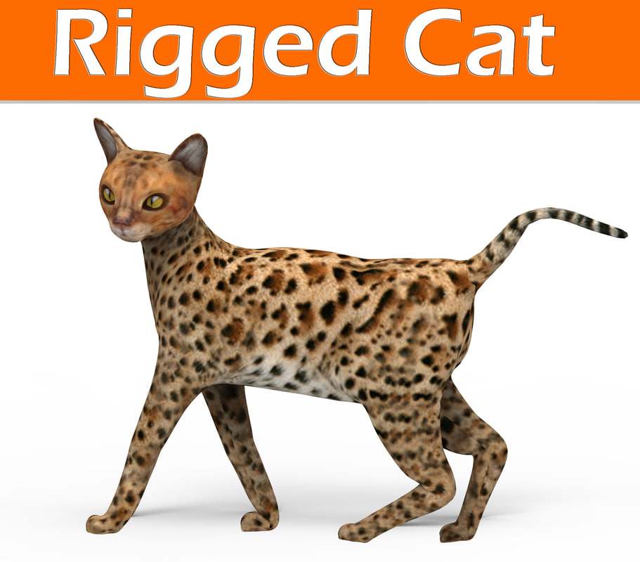 3D cat rigged