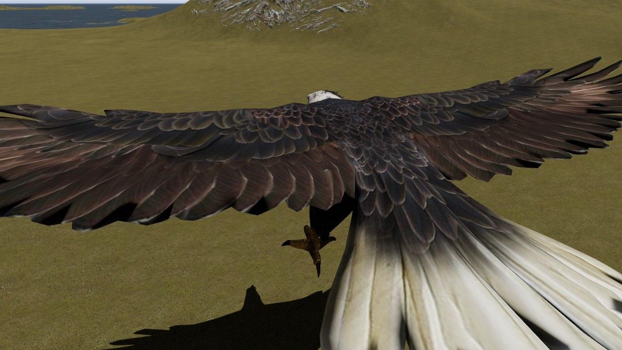 eagle motion 3D model