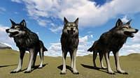 3D 5 lobos model